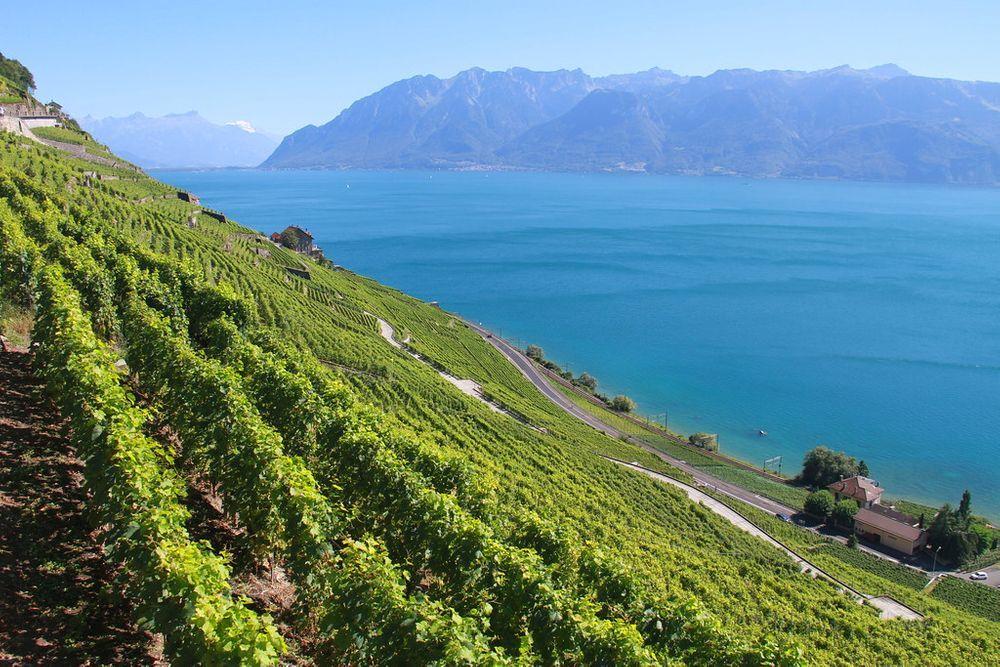 lavaux-svizzera-vigne-cantine-vacanze-estate di san martino-scambio-casa